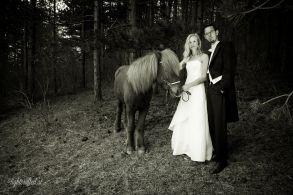Hochzeit_Pferde_5179