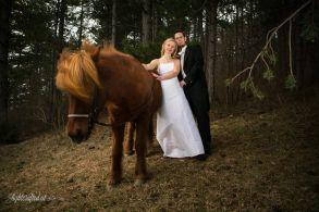Hochzeit_Pferde_5194