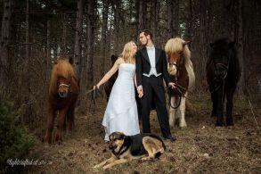 Hochzeit_Pferde_5205