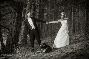 Hochzeit_Pferde_5273