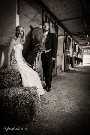 Hochzeit_Pferde_5328