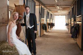 Hochzeit_Pferde_5331