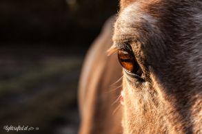 Pferd_und_Familie-0547