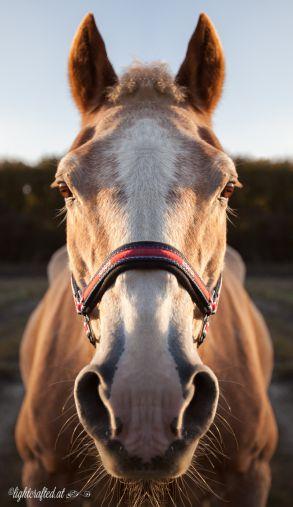 Pferd_und_Familie-0548