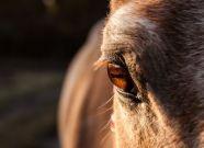 Familienshooting mit Pferd